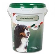 PrimeVal Gelatinaat Hond | 500 g